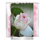 Pink Lady 2013 Shower Curtain