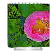 Pink Lotus In Backyard Of Home In Bangkok-thailand. Shower Curtain