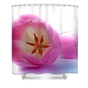 Pink Tulips Close Up And Personal Shower Curtain