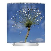 Pipewort Grassland Plants Blooming Shower Curtain