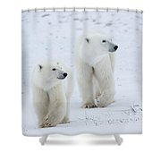 Polar Bears Ursus Maritimus Walking Shower Curtain