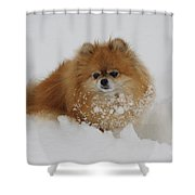 Pomeranian In Snow Shower Curtain