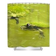 Pond Turtles Shower Curtain