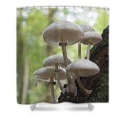 Porcelain Fungus Shower Curtain