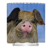 Portrait Of A Boar Shower Curtain
