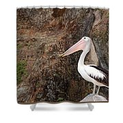 Portrait Of An Australian Pelican Shower Curtain