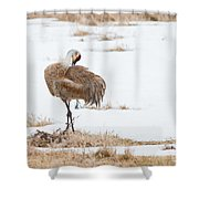 Preening Crane Shower Curtain