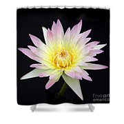 Pretty Pink And Yellow Water Lily Shower Curtain