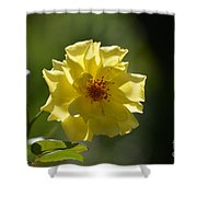 Pretty Yellow Rose Blossom Shower Curtain