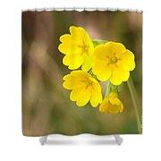 Primula Cowslip Fairy Cups Shower Curtain