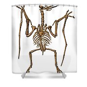 Pterodactylus, Extinct Flying Reptile Shower Curtain