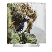 Puffins On The Islet Of Mykines, Faroe Shower Curtain
