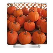 Pumpkins On Pumpkin Patch Shower Curtain