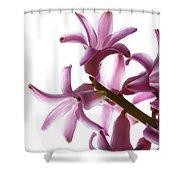 Purple Hyacinth Macro Shot. Shower Curtain