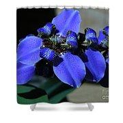 Purple Iris 2 Shower Curtain