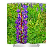 Purple Lupine On Campobello Island-nb Shower Curtain