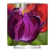 Purple Tulip Macro Shower Curtain