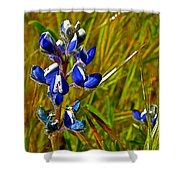 Pygmy-leaved Lupine In Antelope Valley Poppy Preserve-california Shower Curtain