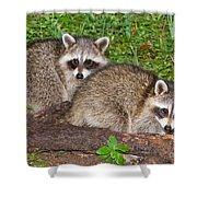 Raccoons Shower Curtain