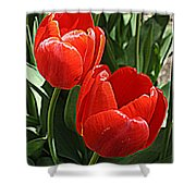 Radiant In Red - Tulips Shower Curtain