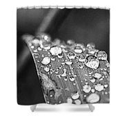 Raindrops On Grass Blade Shower Curtain