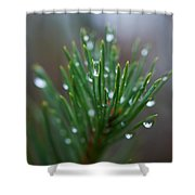 Raindrops On Pine Shower Curtain