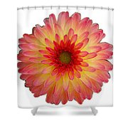 Red And Yellow Dahlia Shower Curtain