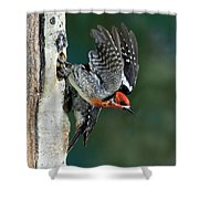 Red-breasted Sapsucker Shower Curtain