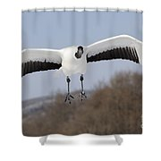 Red-crowned Crane Shower Curtain