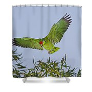 Red-crowned Parrot Shower Curtain