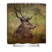 Red Deer  Cervus Elaphus Shower Curtain
