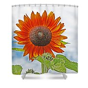 Red Face Sunflower At Olympia Shower Curtain