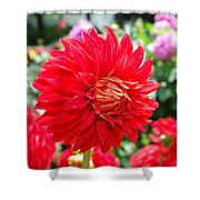Red Flower Shower Curtain