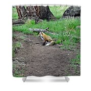 Red Fox In Yellowstone Shower Curtain