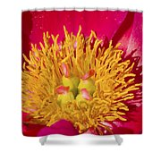 Red Peony Flower Shower Curtain