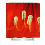 Red Stamens Shower Curtain