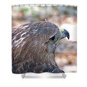Red Tailed Hawk 2  Shower Curtain