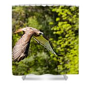 Red Tailed Hawk Shower Curtain