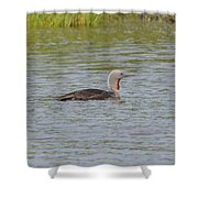 Red-throated Loon Shower Curtain