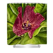 Red Tropical Tree Flower Shower Curtain