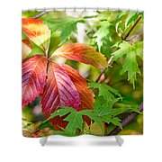 Red Viginia Creeper And Maple Leaves Shower Curtain