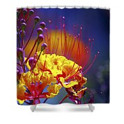 Red Yellow Blossoms 10197 Shower Curtain