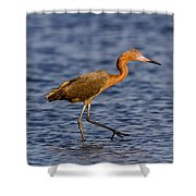 Redish Egret Shower Curtain