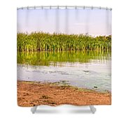 Reeds Close To The Shore Shower Curtain