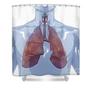 Respiratory System Shower Curtain