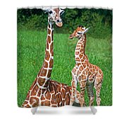 Reticulated Giraffe Calf With Mother Shower Curtain