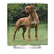 Rhodesian Ridgeback Dog Shower Curtain