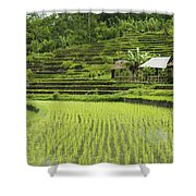 Rice Fields In Bali Indonesia Shower Curtain