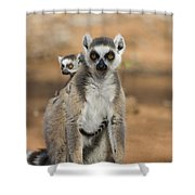 Ring-tailed Lemur And Baby Madagascar Shower Curtain