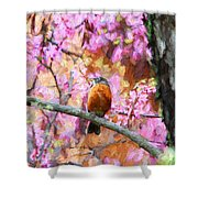 Robin In A Red Bud Tree Shower Curtain